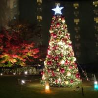 「クリスマスツリー」/グランドプリンスホテル京都
