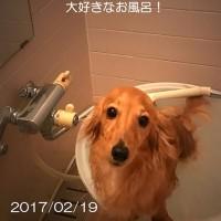 「ニコ」1歳の誕生日、おめでとう!