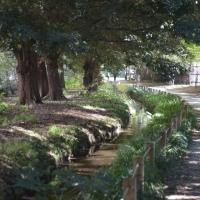 玉川上水を歩く 新宿御苑の散歩道