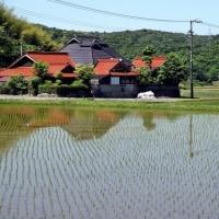 田植えが終わった山地の集落
