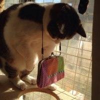 猫に かばん