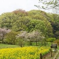 山野草2(四季の森公園)