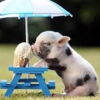 5月20日土曜日は暑くなるようです!