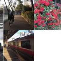 これから花を見に都市緑化植物園に行きます。