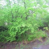5/25(木)のPACニュース~暮らし&身近な法律・判例の情報