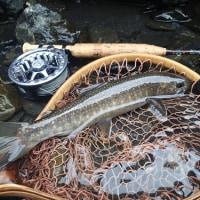 2か月ぶりの釣行で、ようやく初イワナが。