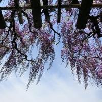 京都鳥羽水環境保全センターの藤