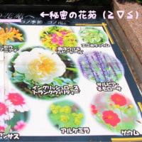 秘密の花苑へ〜(≧∇≦)