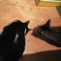 猫とゴールドラッシュデー