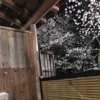 夜桜も素敵です
