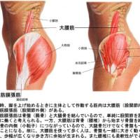 歩き方を考える① 大腰筋と大腿筋膜張筋