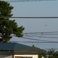 遠くの空にハングラーダーが飛んでいた