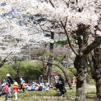 今日の千秋公園