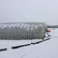 今日は雪。