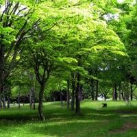 野木和公園内の散策