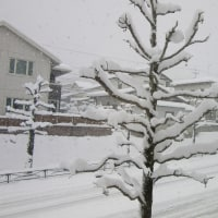 3 2019(H29)年 新年の大雪に遭遇  通勤道路でも
