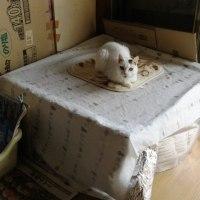 ゆったりと過ごす猫