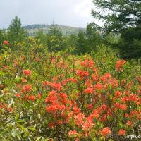 県の天然記念物のミヤマモンキチョウを求めて峰の原高原から根子岳へ。妻女山のいま(妻女山里山通信)