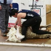 羊用バリカンの研磨をお預かりします
