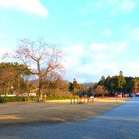 新年初の上賀茂神社とすぐき漬