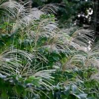秋の山野草をさがしに
