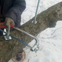 裂けた木をボルトでつないで延命・・・の巻