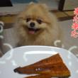 今年も食べたよウナギうまうまっ!(今日は写真です、動画もあります)