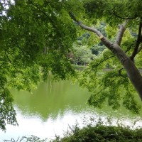 デジブック 『初夏の薬師池公園』