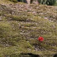 城南宮の枝垂れ梅