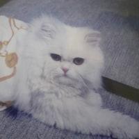 柚樹と書いてユキという猫ニャンニャンのお誕生日