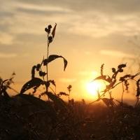山岳点景:野辺の夕暮