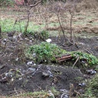 イノシシがゴミを掘り起こす