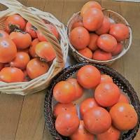 柿の「追熟」完了