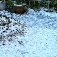 夕べ雪が降った