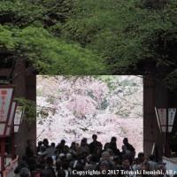 春の京都(二日目)(E-M1)