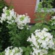 夏のボーダー花壇