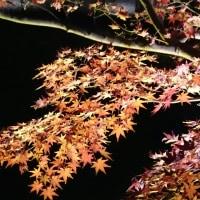 東山動植物園紅葉1