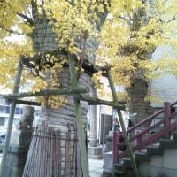 ん!大銀杏(1)(2)