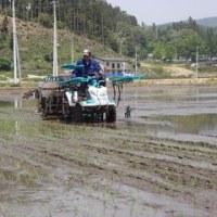 南三陸町廻舘工区で農地復旧後初めての田植作業が行われました