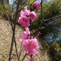 咲いてました。。