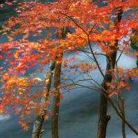 12月9日  晩秋の水辺