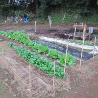 10月22日・畑Bの草取り土寄せ追肥の作業完了!