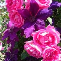 ハウステンボスのバラ祭りへ行ってきました。