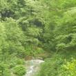 渓谷にオオルリの美しい囀りが響き渡り・・