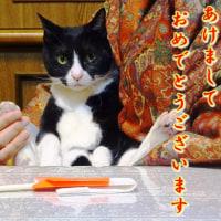 直次郎(なおじろう)☆^^ Happy new year!!