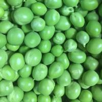 エンドウ豆を冷凍してみた。