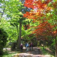 11 神ノ倉山(561m:安佐北区)登山(続き)  これから散策気分で