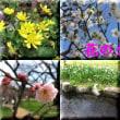 花の写真をタイル風に作りました