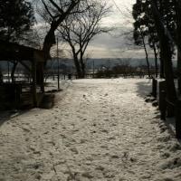 下根子桜(2/22)