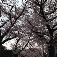 春爛漫、我が庭の今